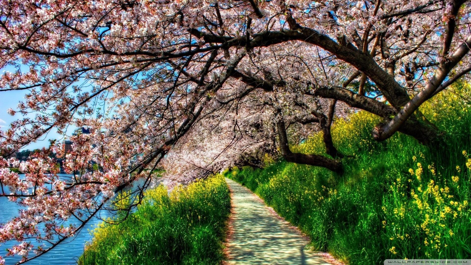 Spring Garden Park Bench HD Wallpaper Of Beautiful Nature