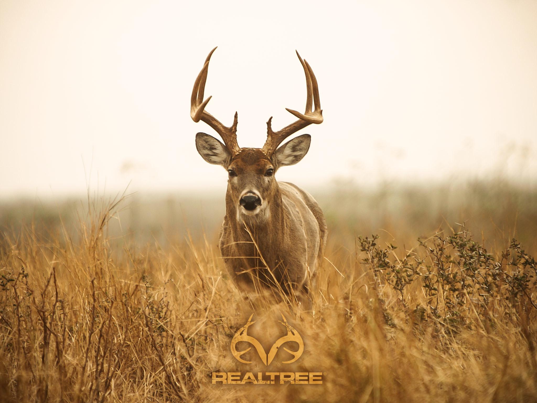 Big Whitetail Buck Wallpaper (56+ Images