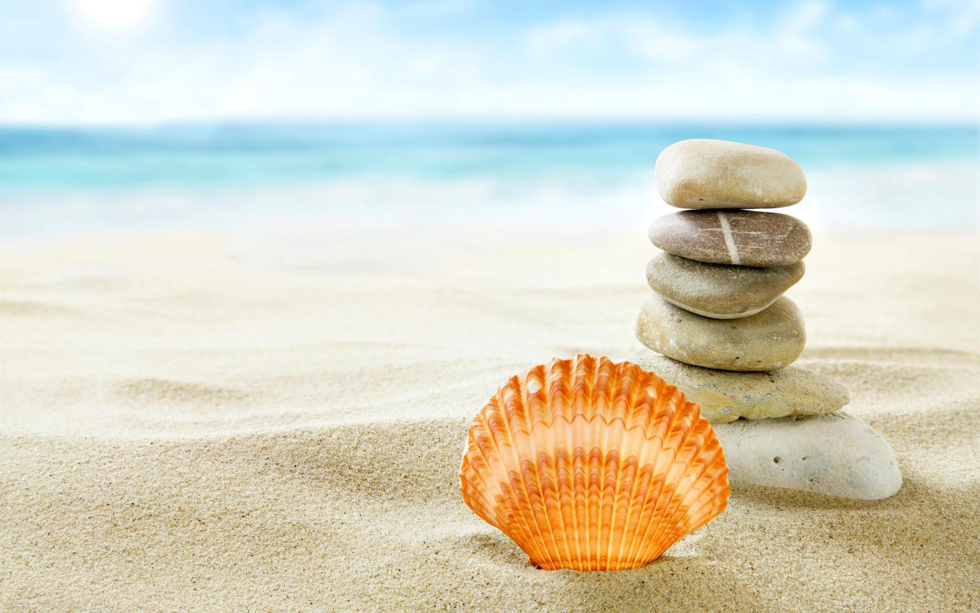 Seashell Desktop Wallpaper 54 Images HD Wallpapers Download Free Images Wallpaper [1000image.com]