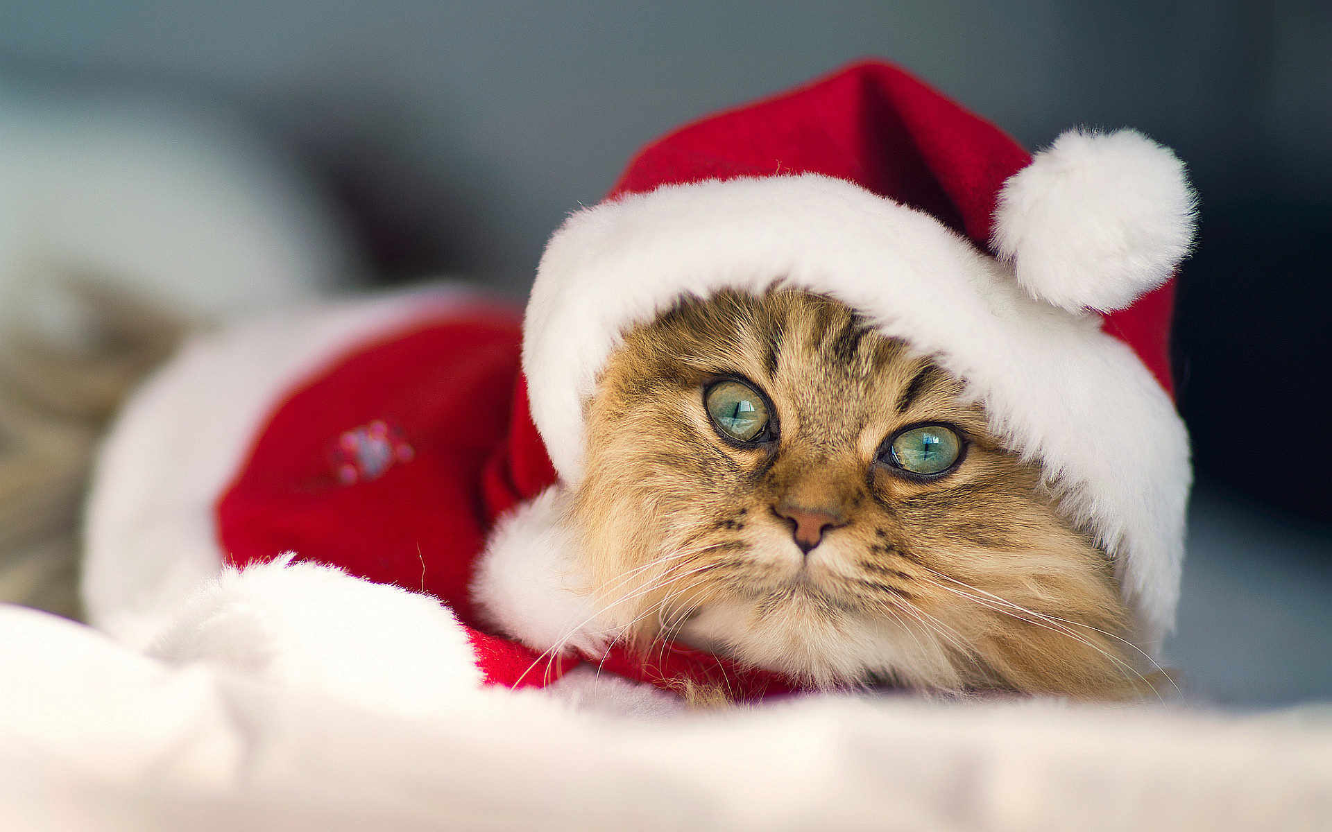 1920x1200 christmas kitty cat picture. Â«Â«