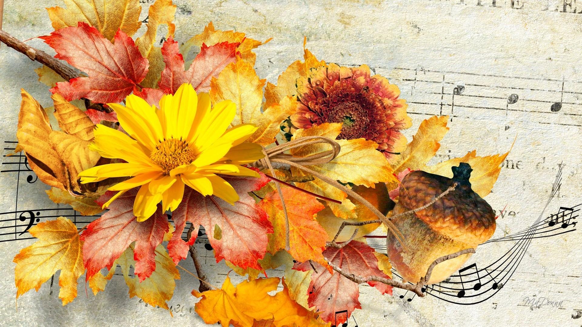 Beautiful Fall Flowers Wallpaper 50 Images