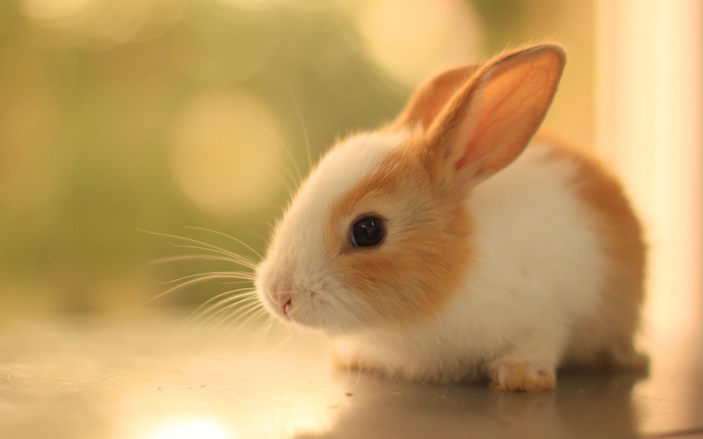 Cute Bunnies Wallpaper 65 Images