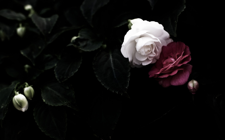 Black And White Flower Wallpaper 56 Images