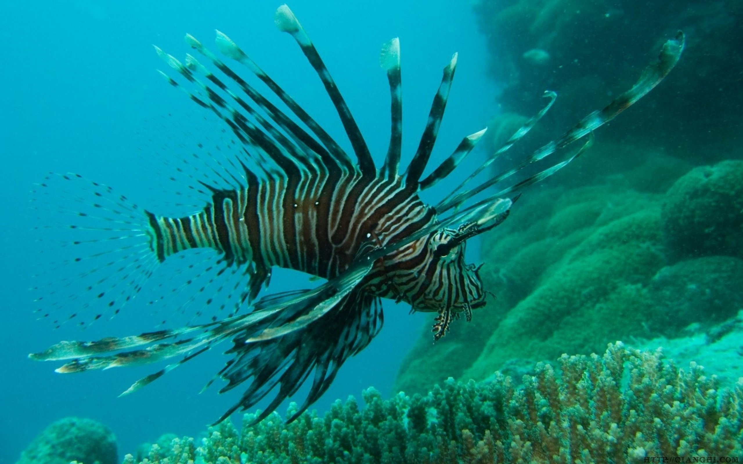 2560x1600 Download Wallpaper · Back. ocean lionfish great barrier reef ...