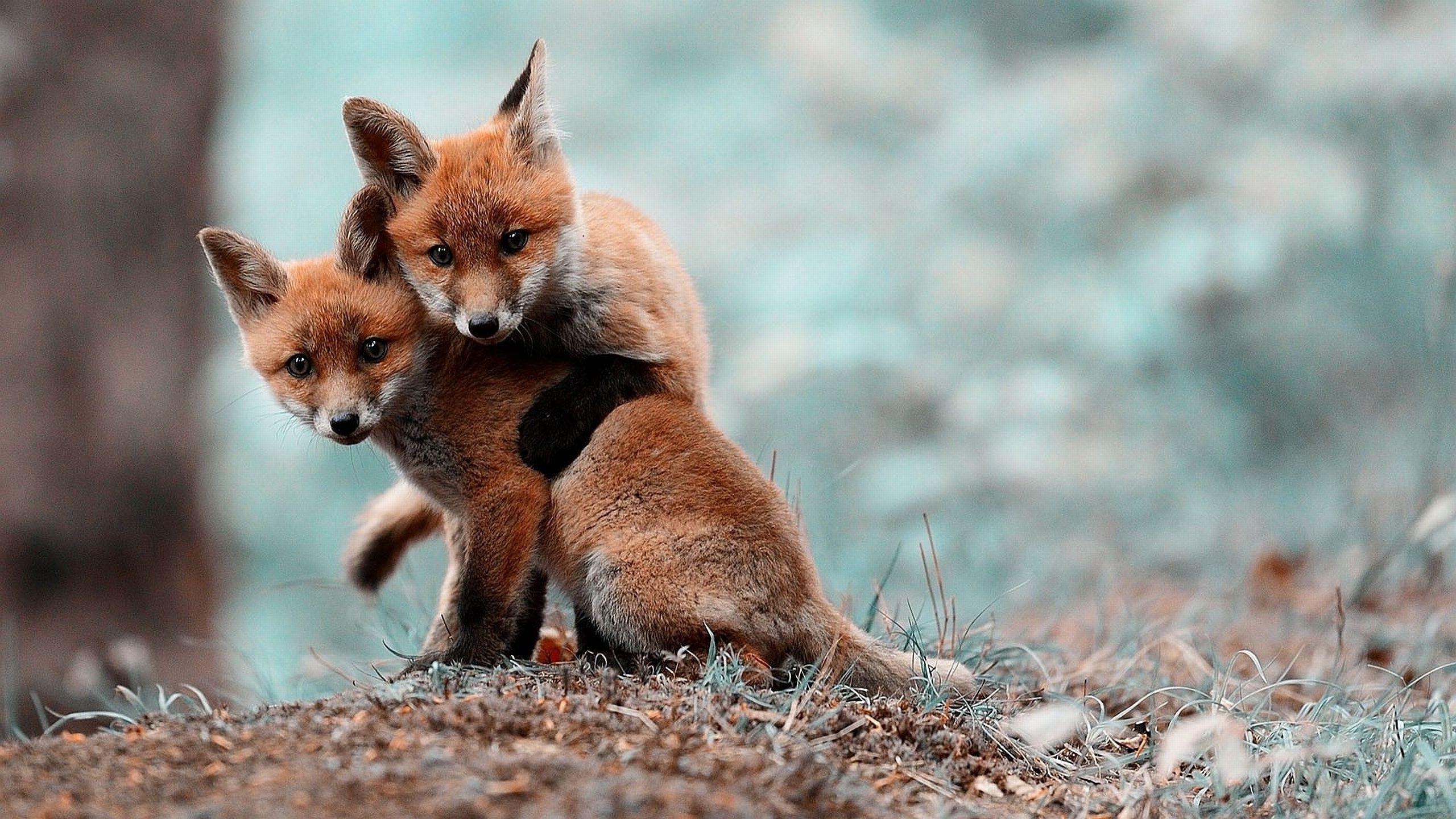 Spring Baby Animals Desktop Wallpapers (48+ images)