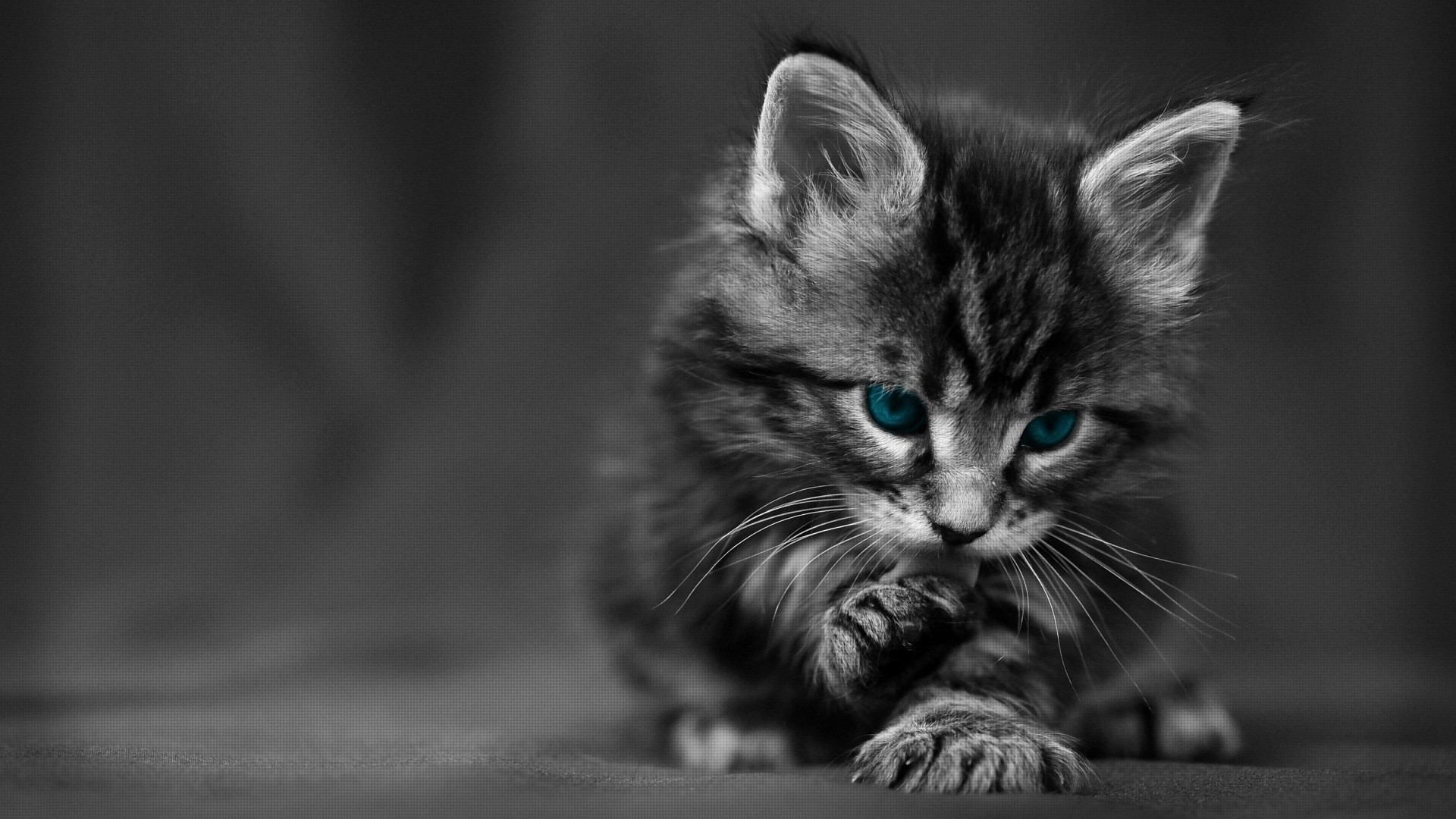 1920x1200 Kitten Wallpaper HD 15950