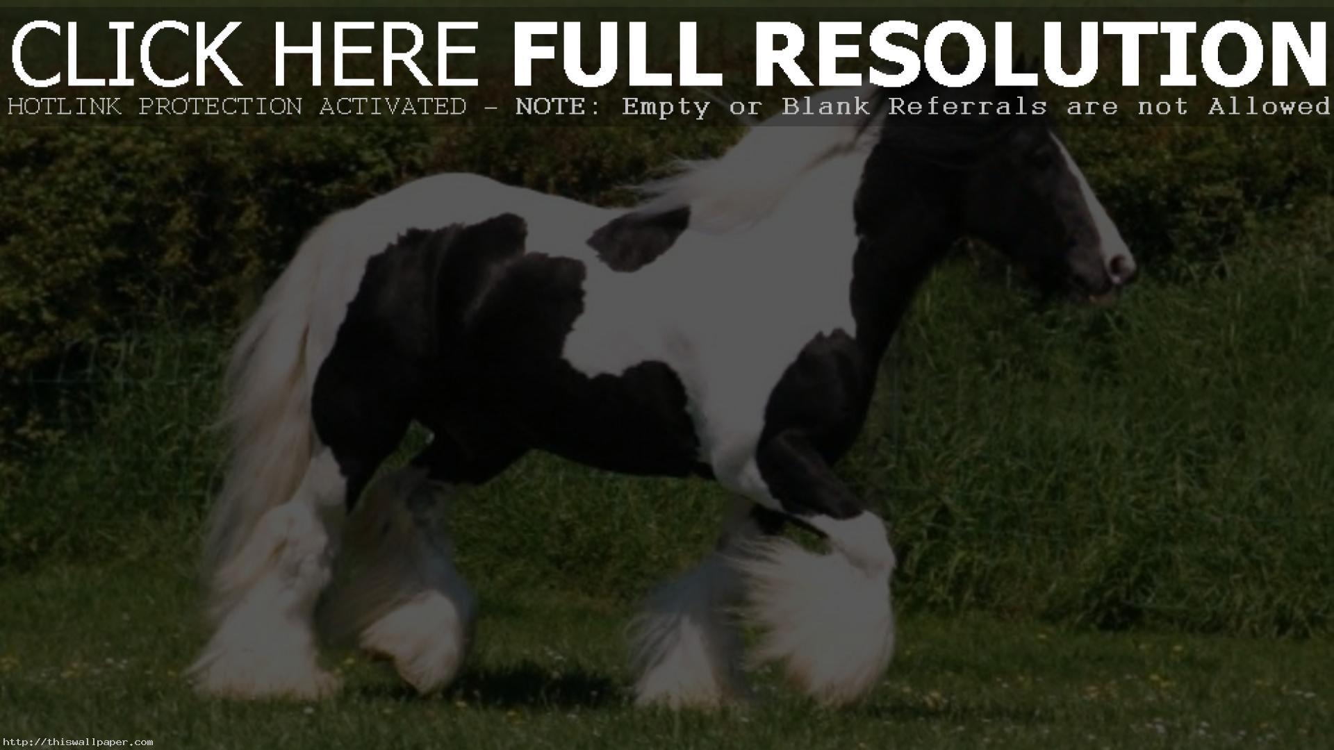 2048x1750 Tovero Paint Horse 2005 Apha Black Splash