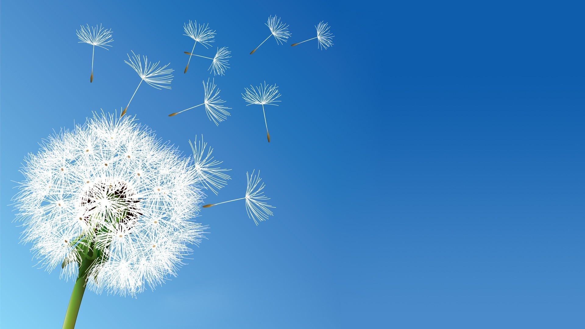 1920x1080 nature, Flowers, Dandelion, Clear Sky Wallpapers HD / Desktop and Mobile  Backgrounds