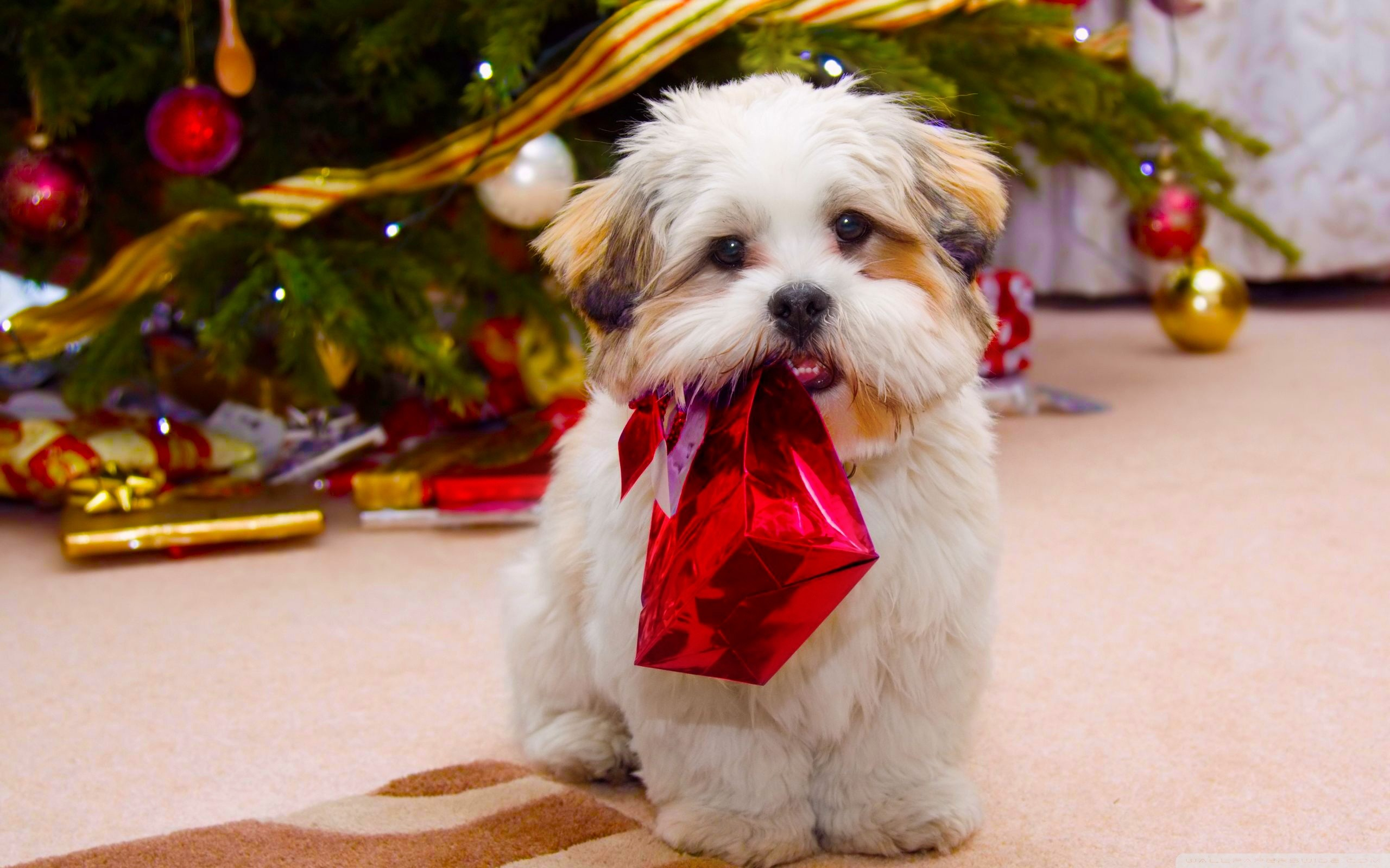 2560x1600 Christmas Puppy Wallpapers For Iphone