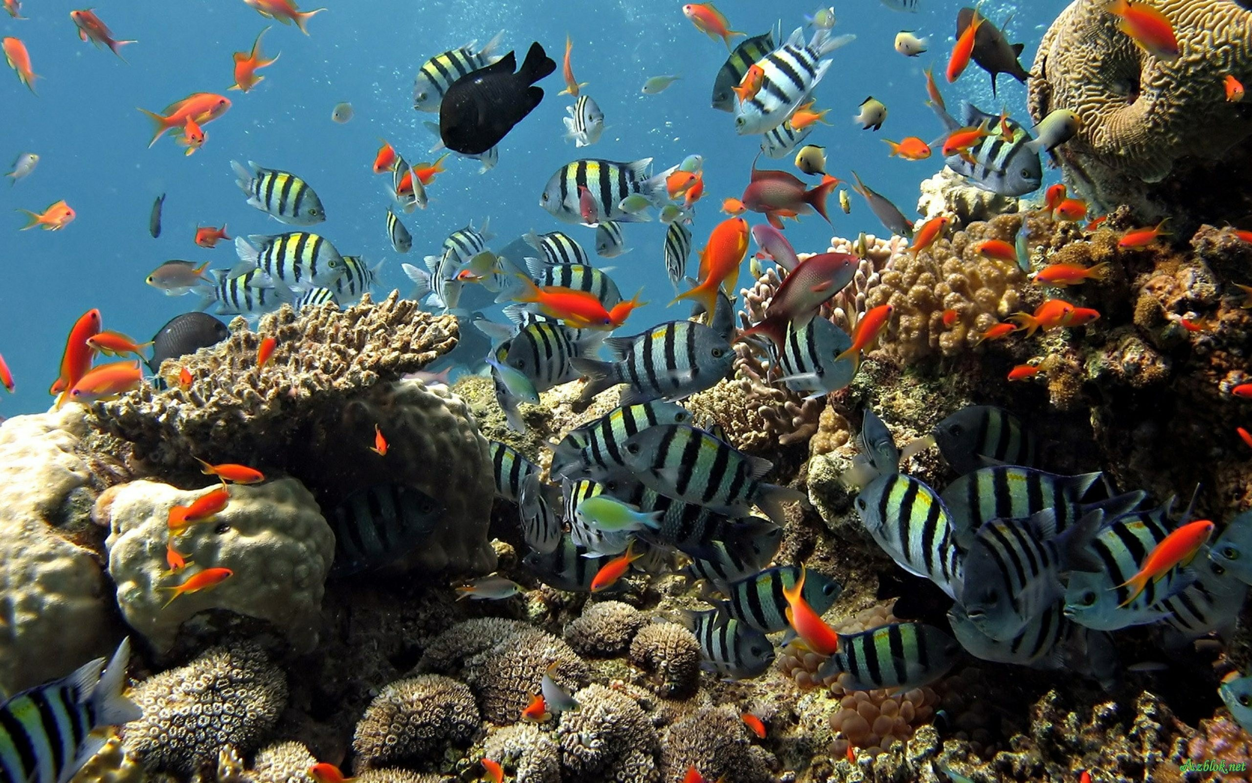 2560x1600 Aquarium Live Wallpaper For Pc Free Download