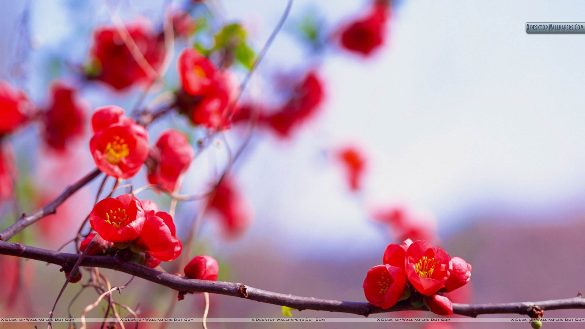 "1920x1080 You are viewing wallpaper titled ""Bunches of Small Red Flowers"" ..."