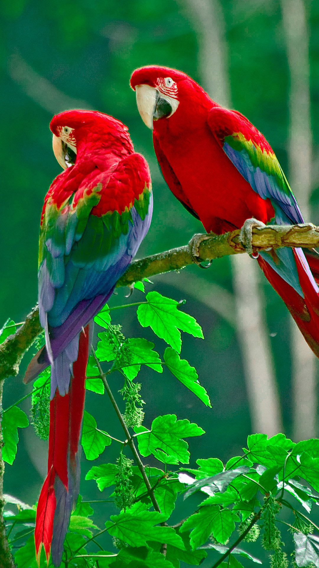 1080x1920 Parrots paradise Galaxy S5 Wallpapers
