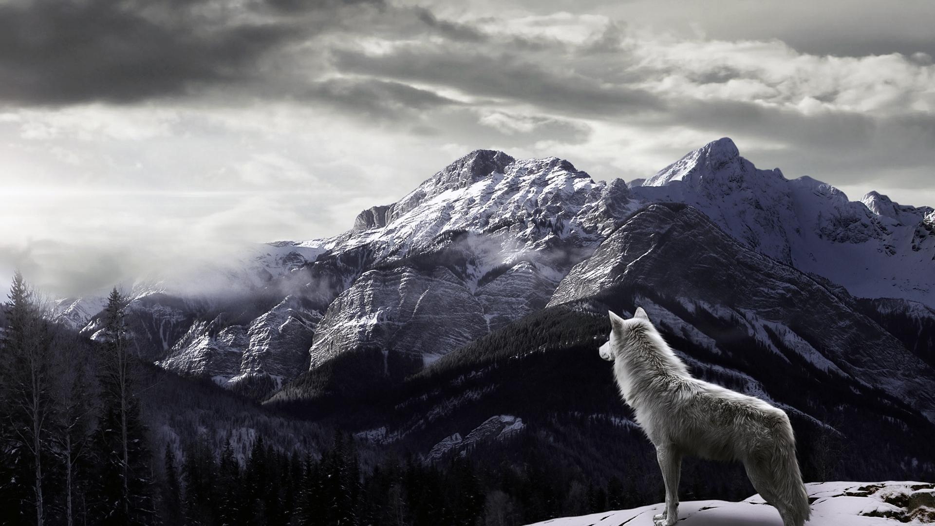 Yin Yang Wallpaper Wolf 44 Images