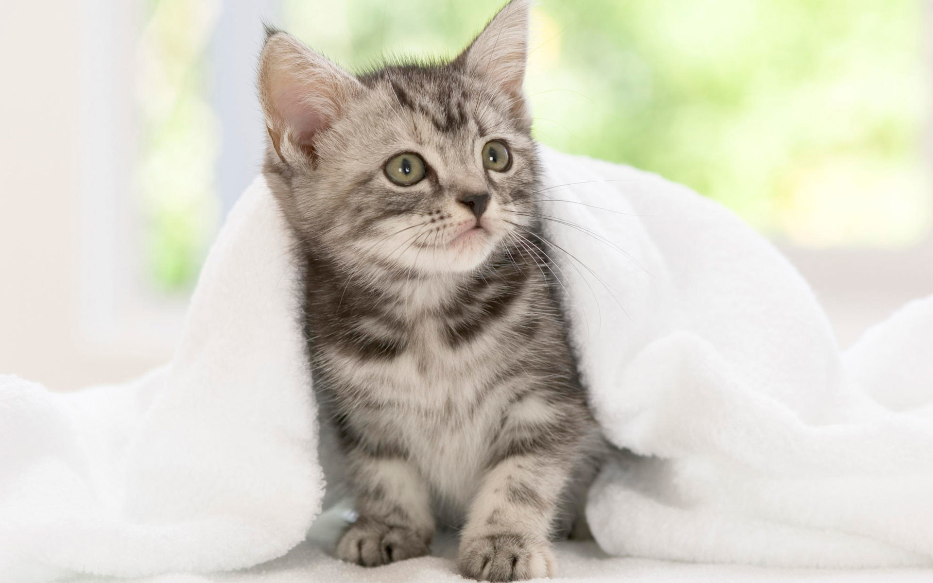 Cute Kitten Desktop Wallpaper 60 Images