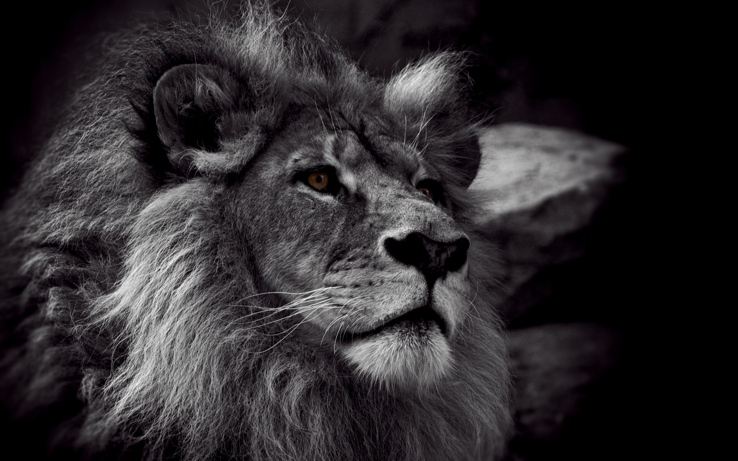 2560x1600 Lion Black And White Wallpaper Picture ...