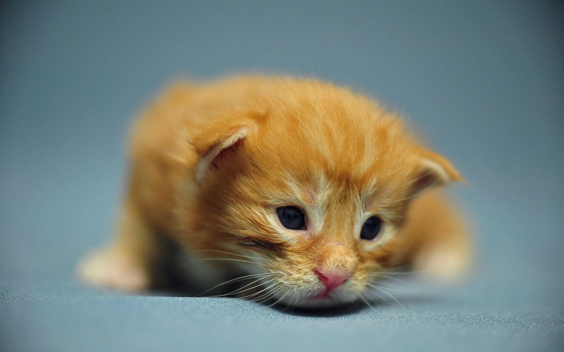 baby kitten wallpapers 59 images