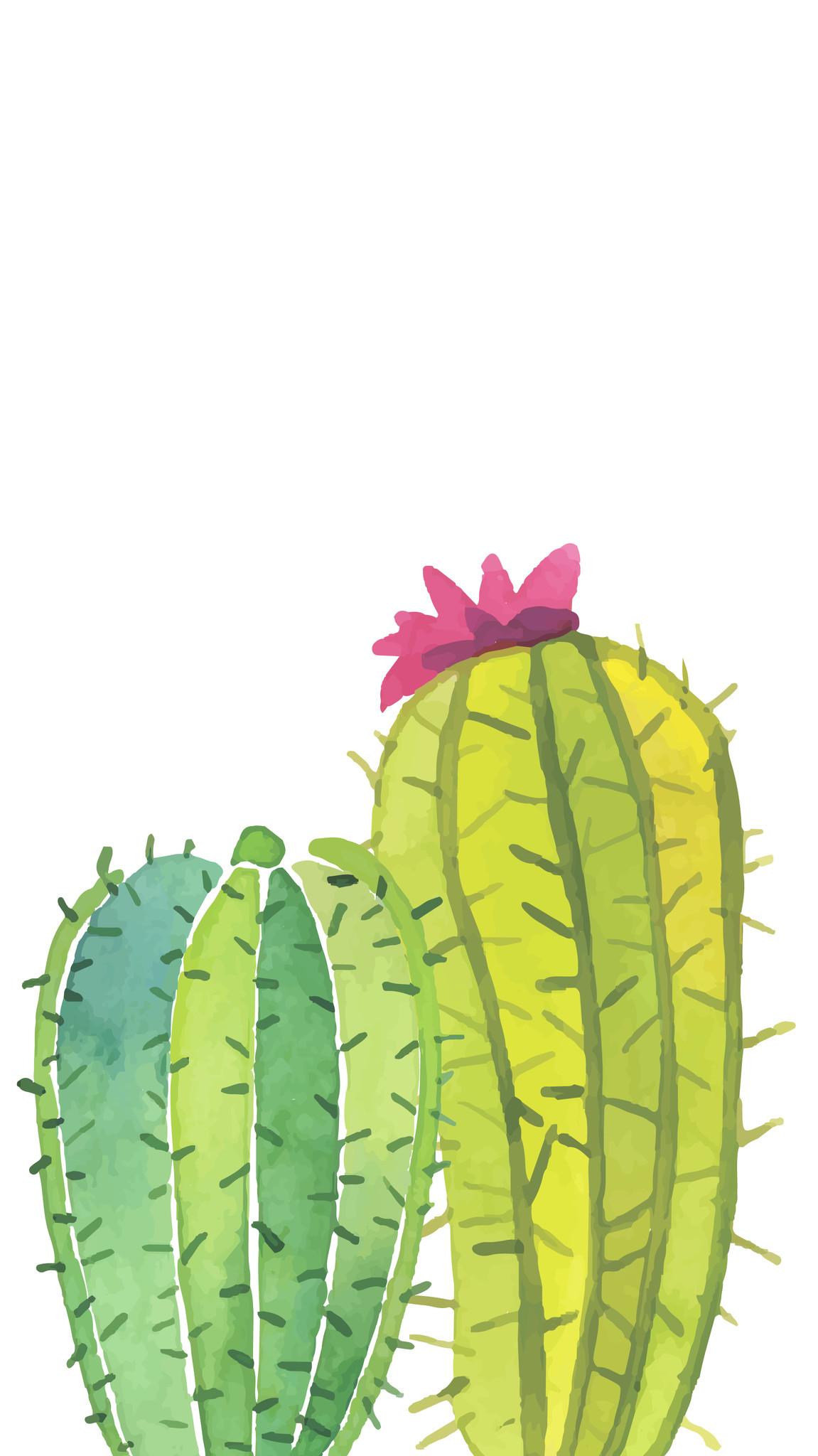 Cactus Wallpaper 52 Images
