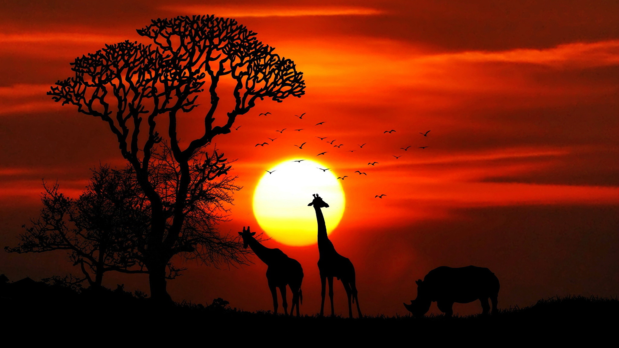 Africa Wallpaper 79 Images