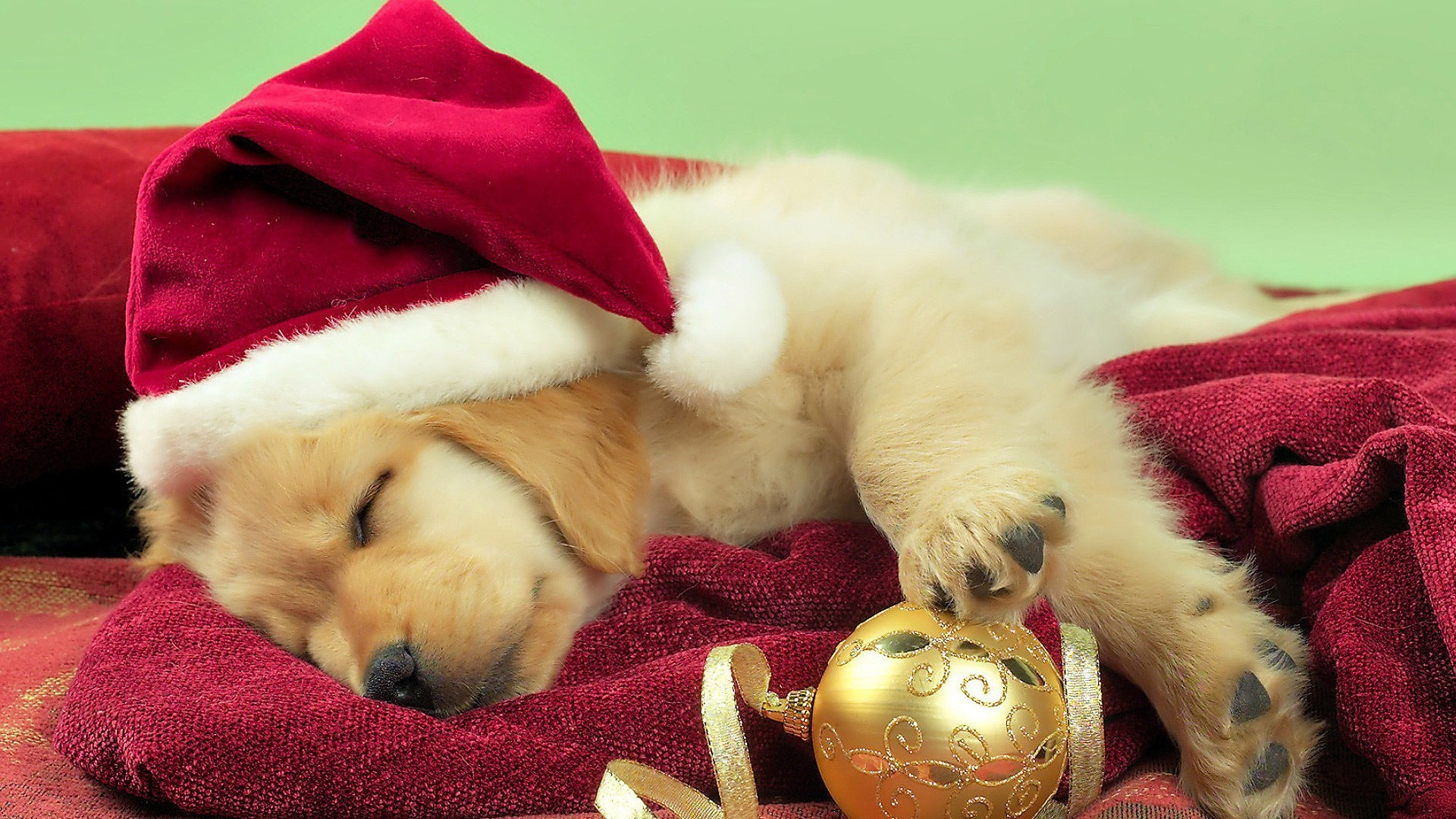 Husky Christmas Puppy.Christmas Puppies Wallpaper 48 Images