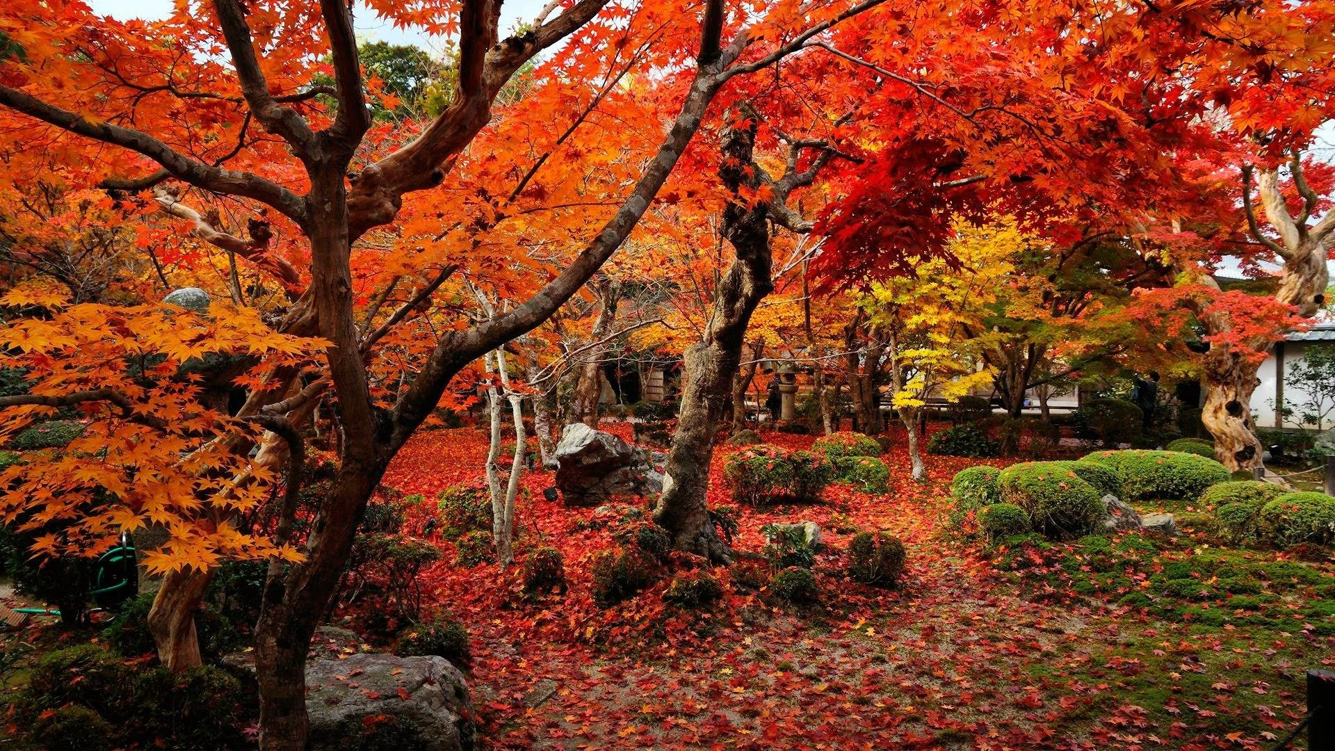 1920x1080 Wallpaper autumn wallpapers temple enkoji colorful world  .