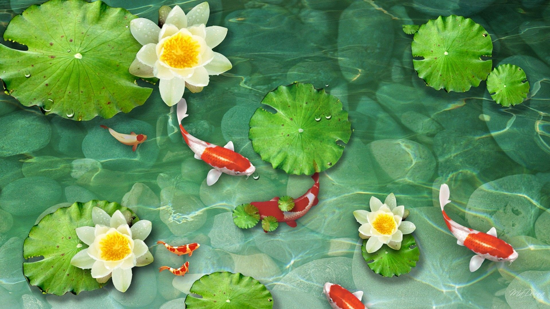 1920x1080 Koi Pond Wallpapers - Wallpaper Cave