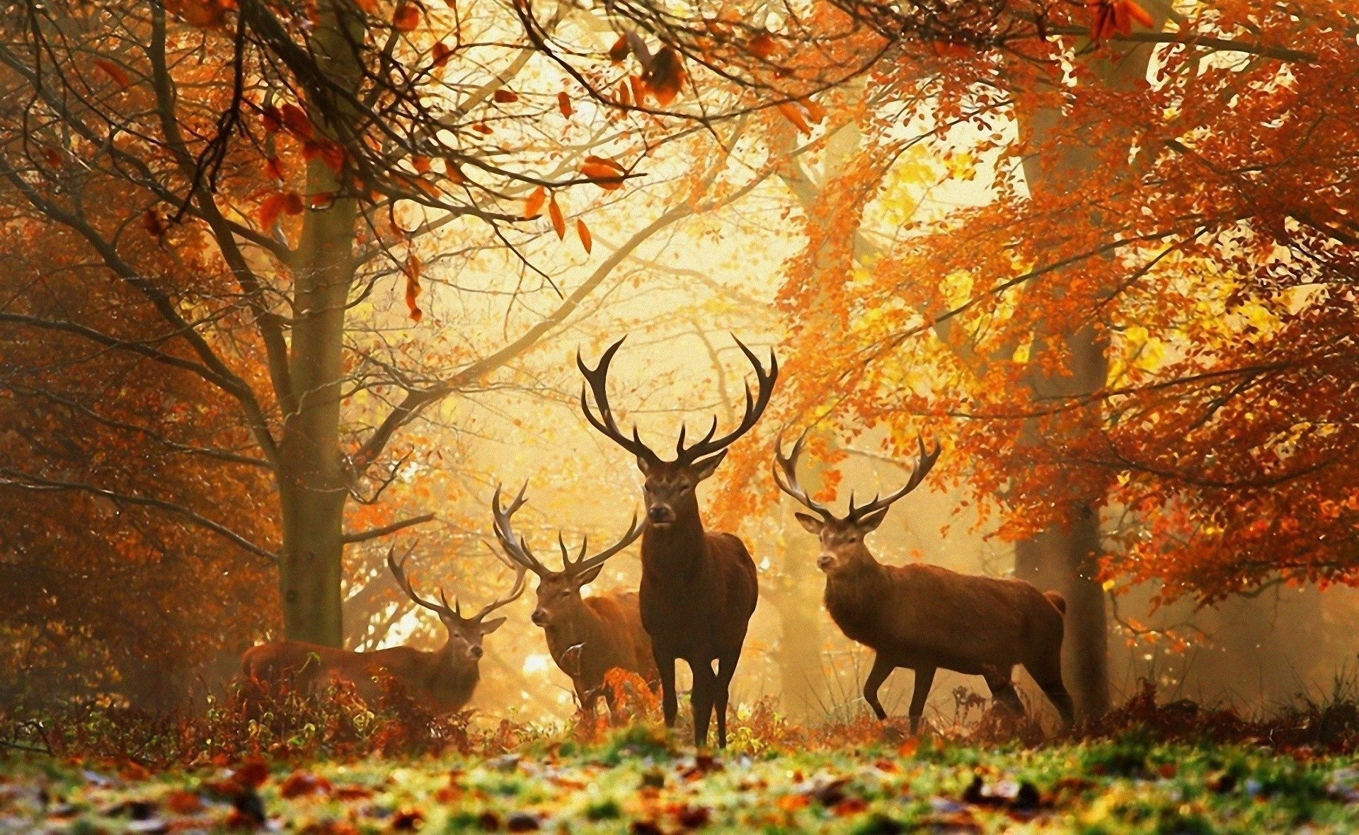 1920x1180 HD Wallpaper | Background ID:298534.  Animal Deer