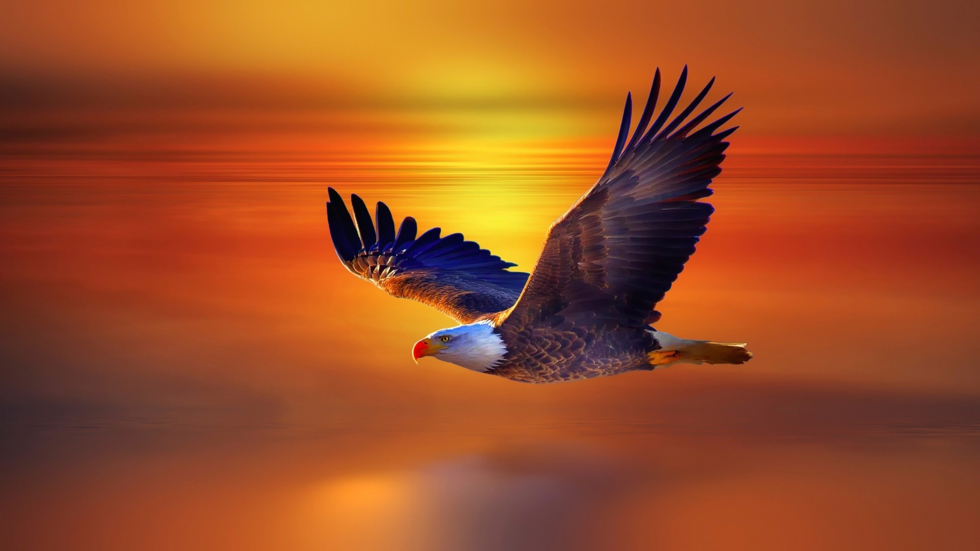 1920x1080 Image-for-Eagle-Wallpaper-Free-1