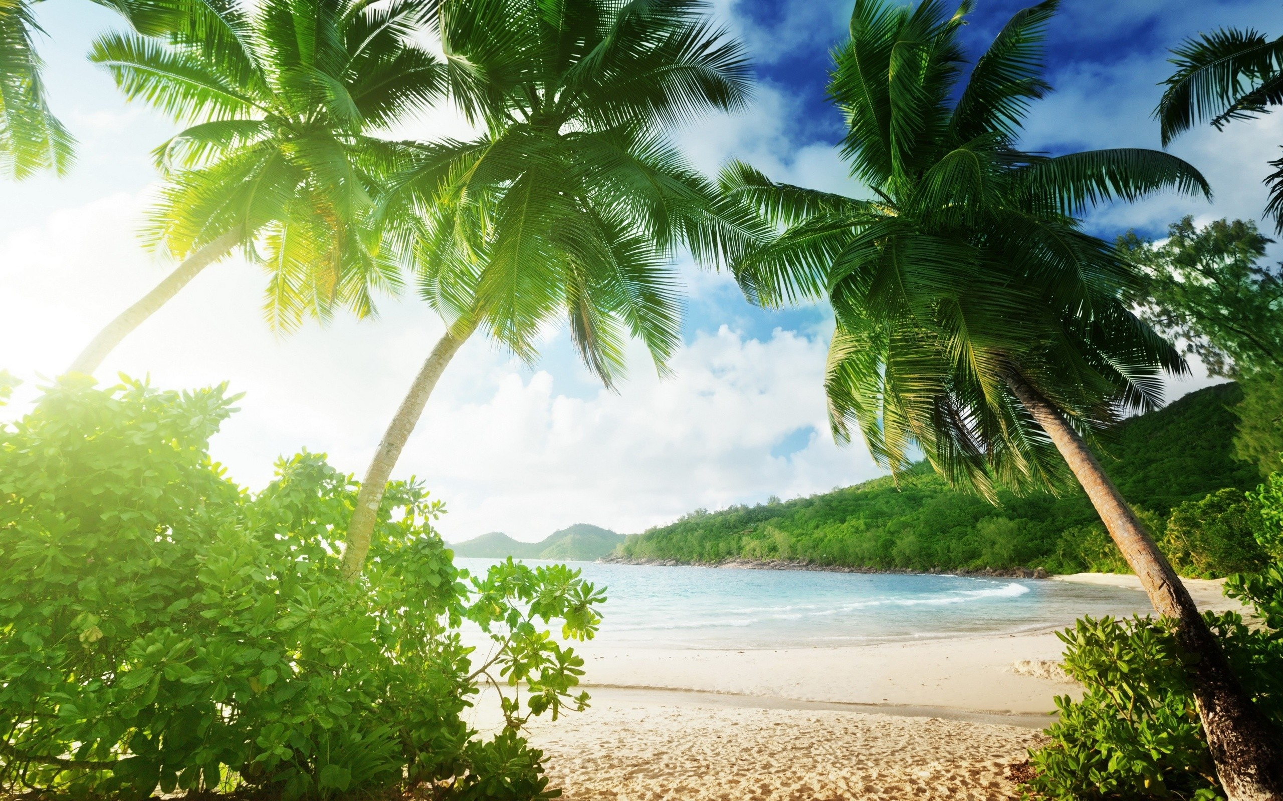 2560x1600 Water Resources, Shore, Palm Tree, Window, Caribbean Wallpaper in   Resolution