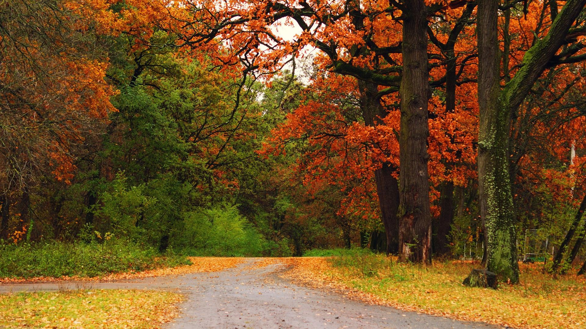 50 Hd Wood Wallpapers For Free Download: Beautiful Fall Backgrounds (50+ Images