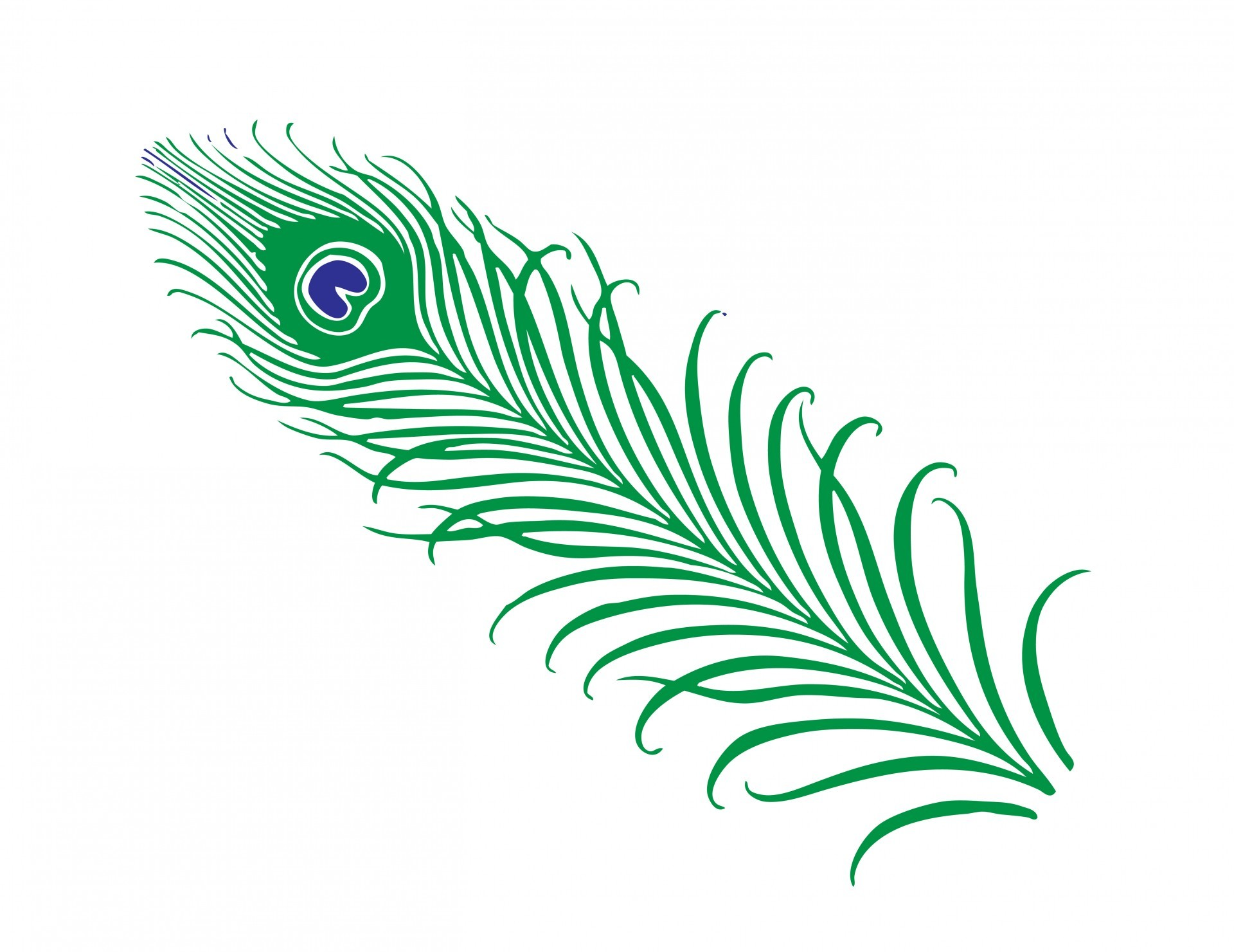 1920x1480 Peacock Feather Clipart