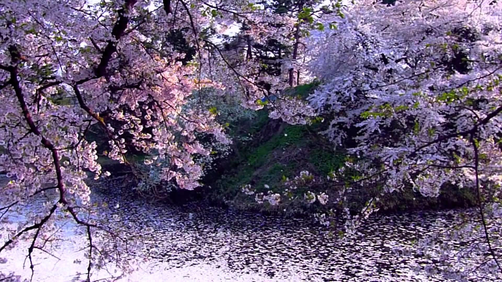Spring Wallpaper Iphone Backgrounds Nature Cherry Blossoms