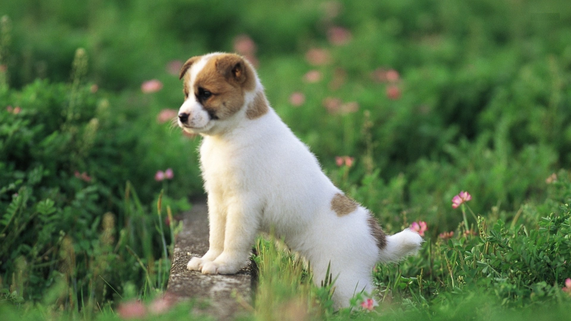 Cute Puppies Wallpaper Hd 55 Images