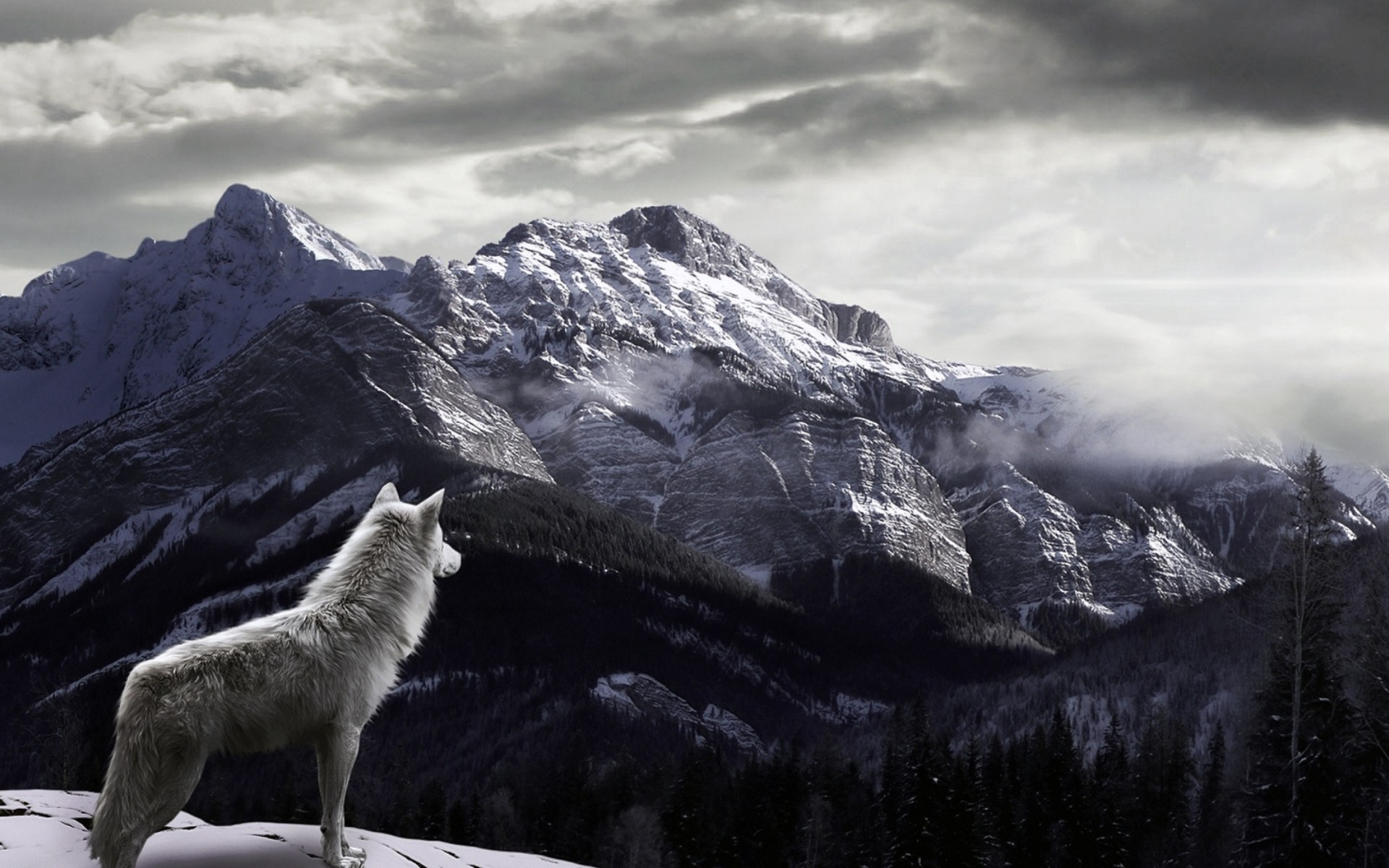 1920x1200 Wolf Wallpapers Collection For Download