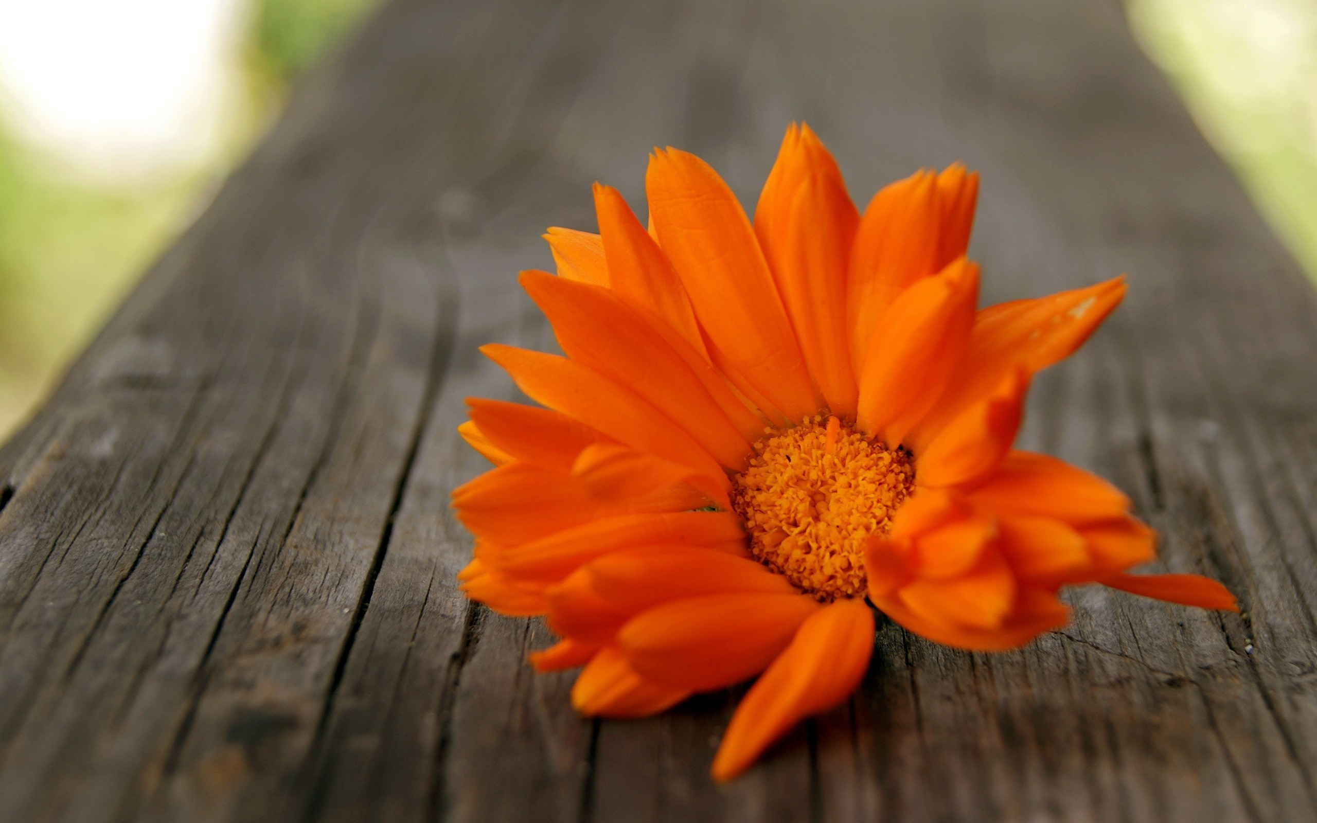 2560x1600 Beautiful Orange Flowers HD Wallpapers