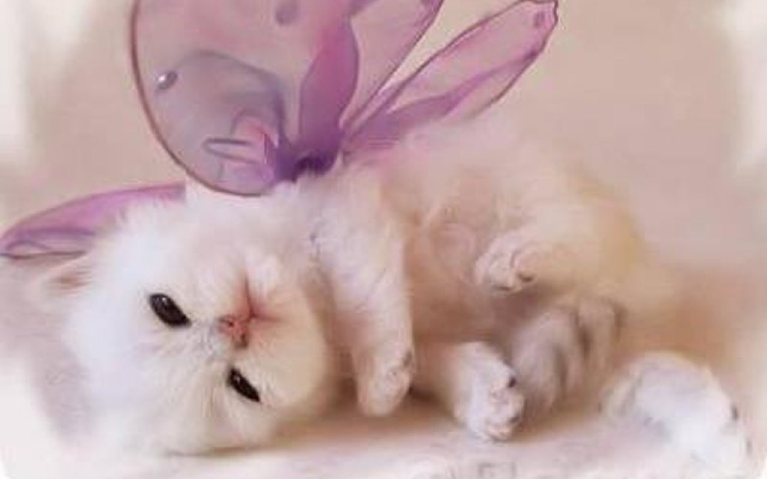Cute Baby Cats Download ✓ HD Wallpaper
