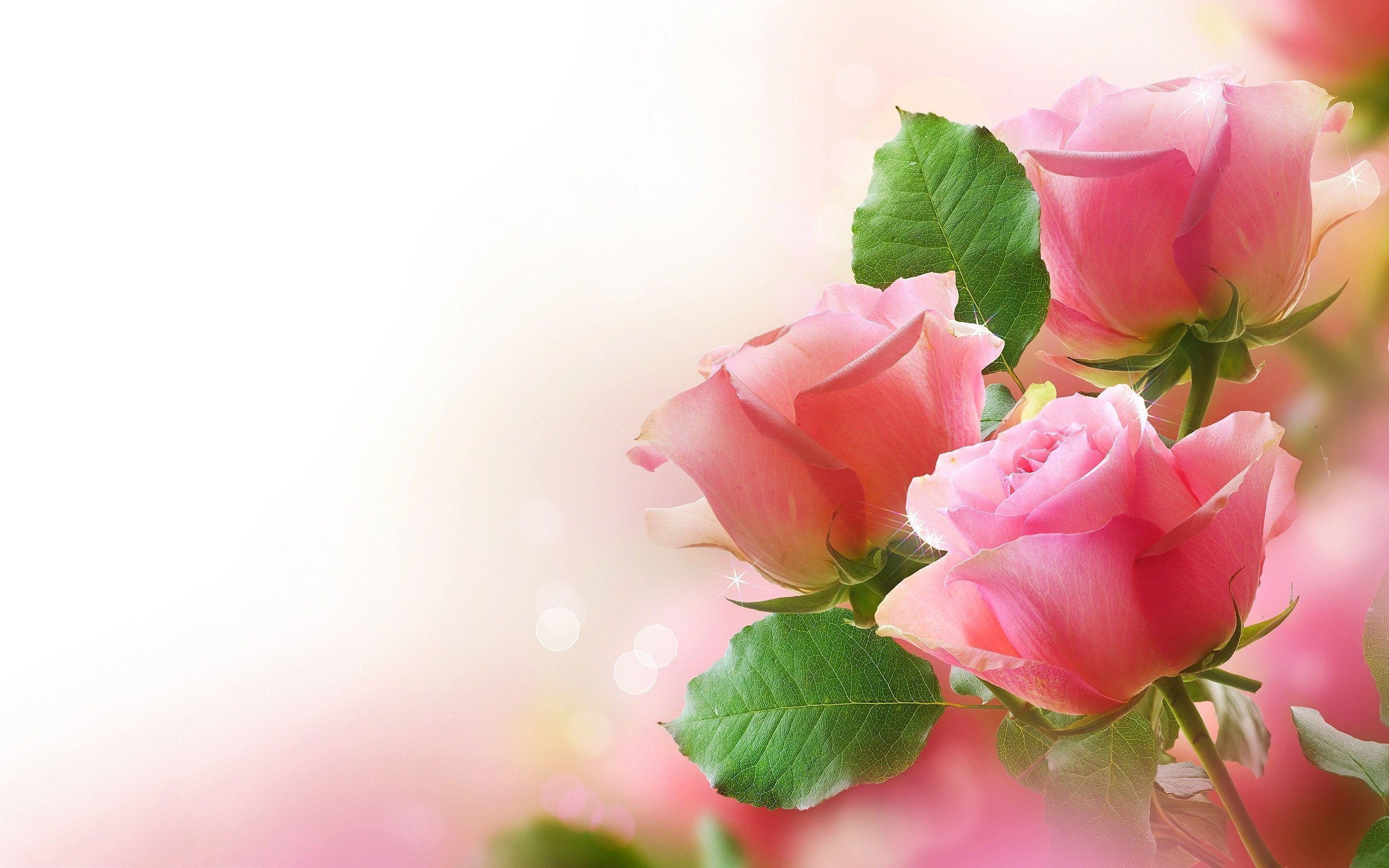 Roses Wallpaper For Desktop 46 Images