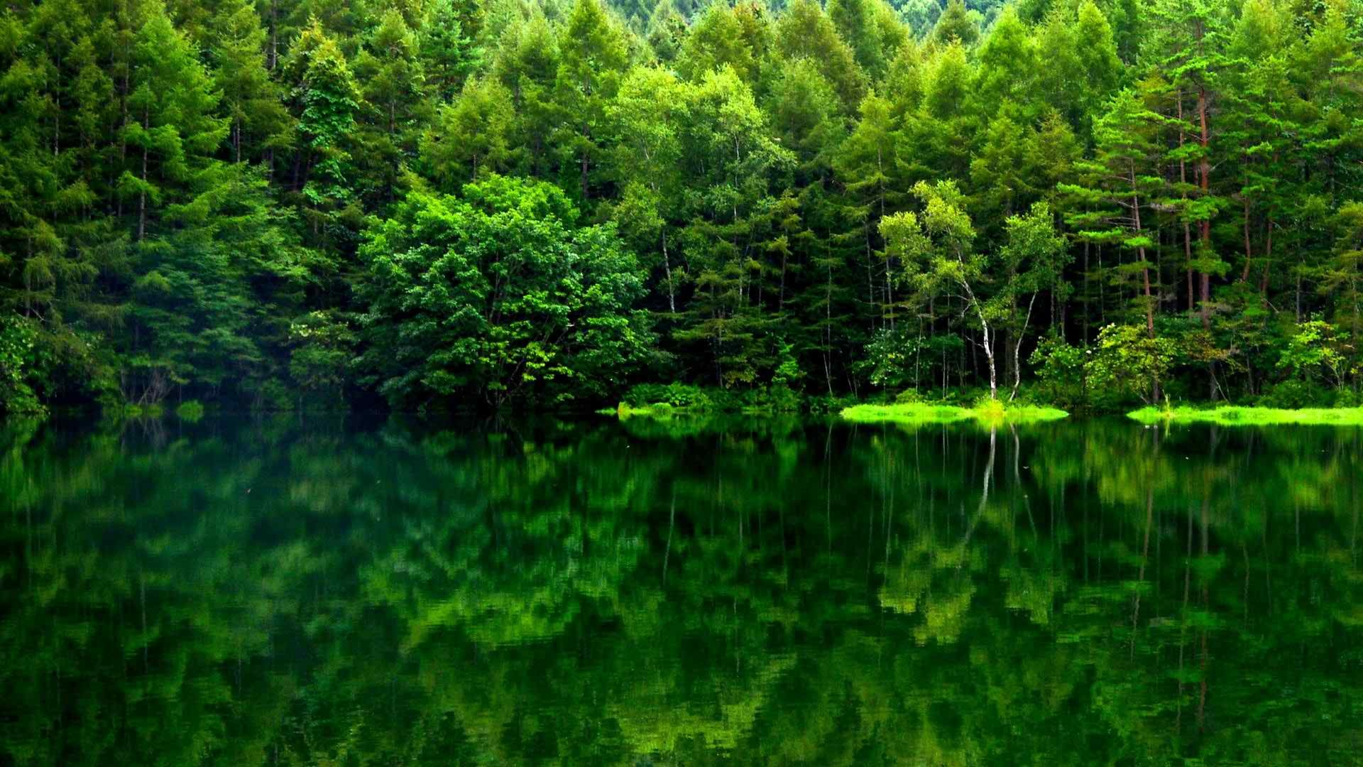 Green Forest Wallpaper (71+ images)