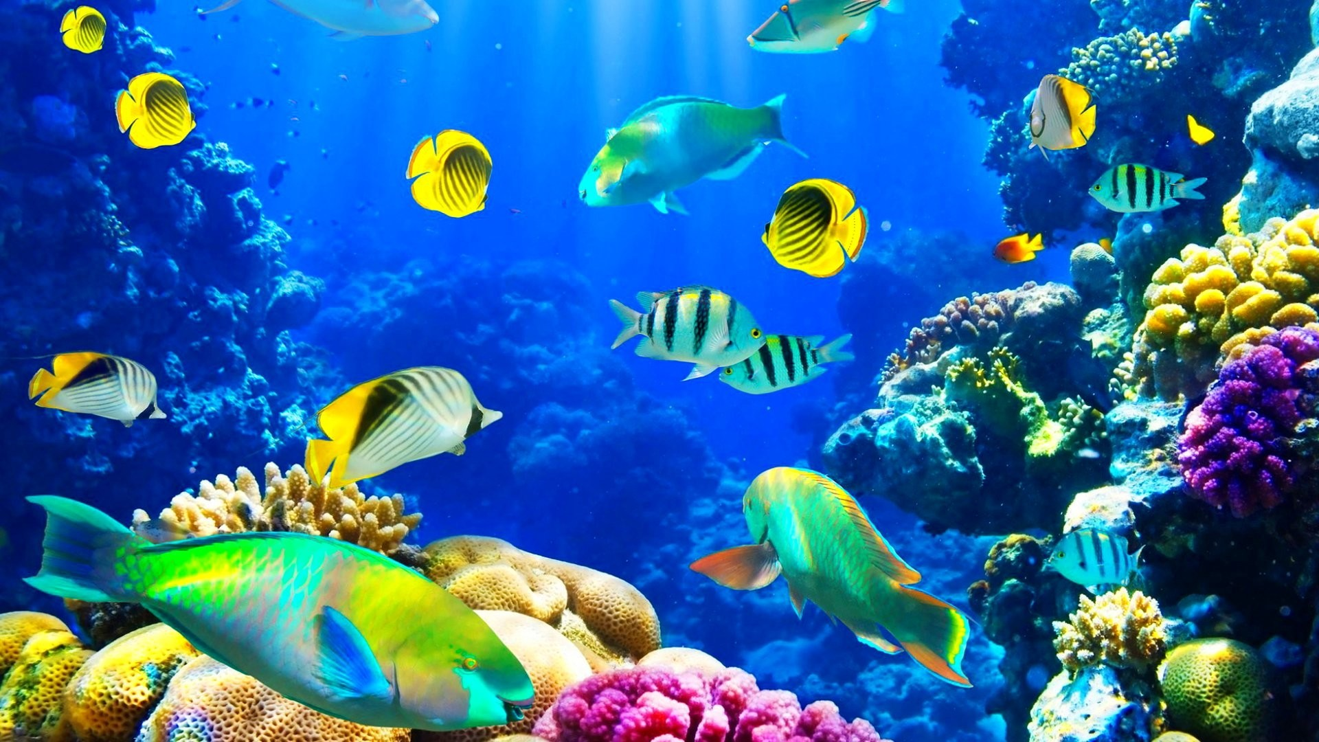 3d fish wallpaper free download for mobile