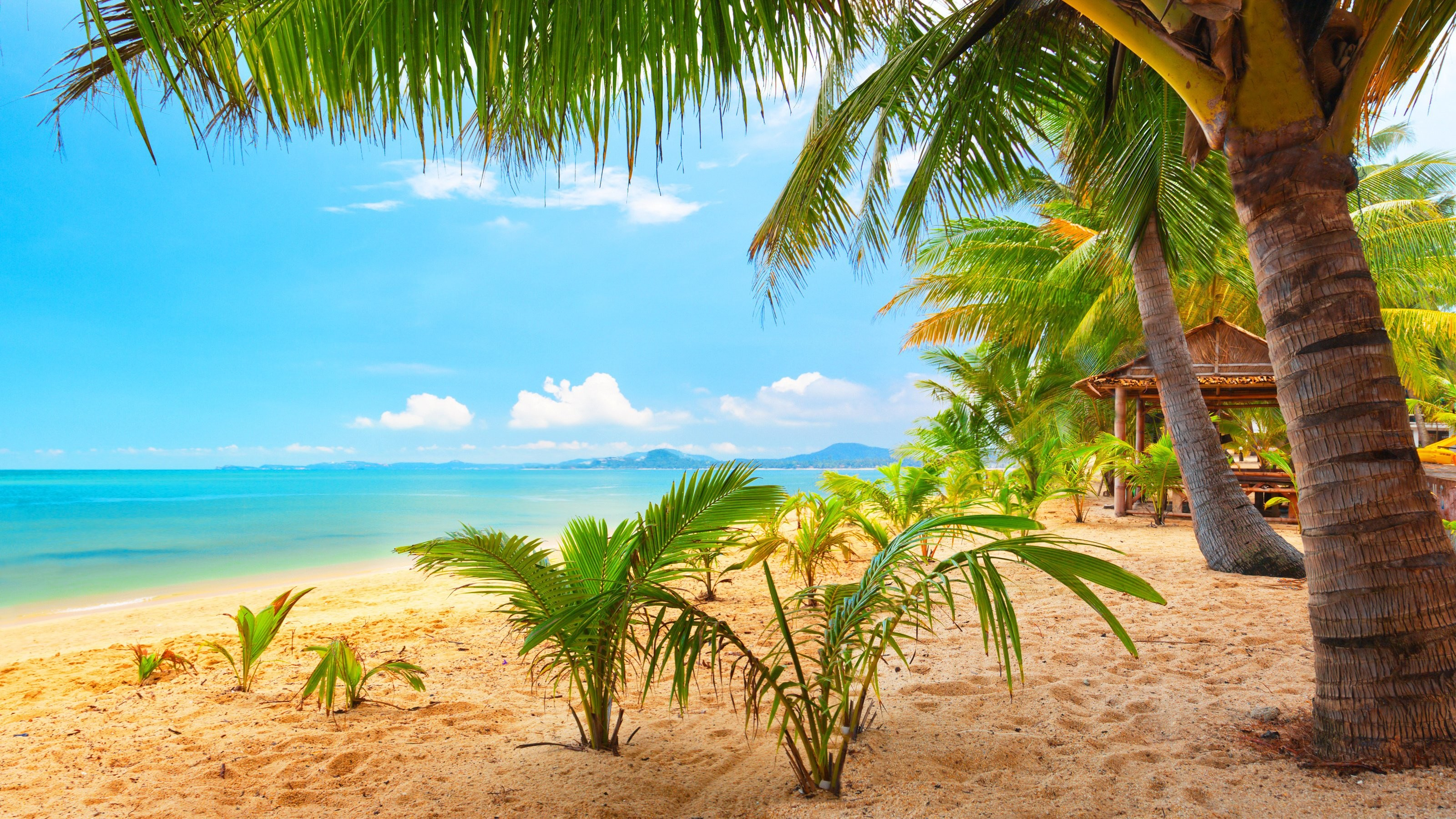 3200x1800 Quality Beach Icons Creative Common - HD Wallpapers.  ...