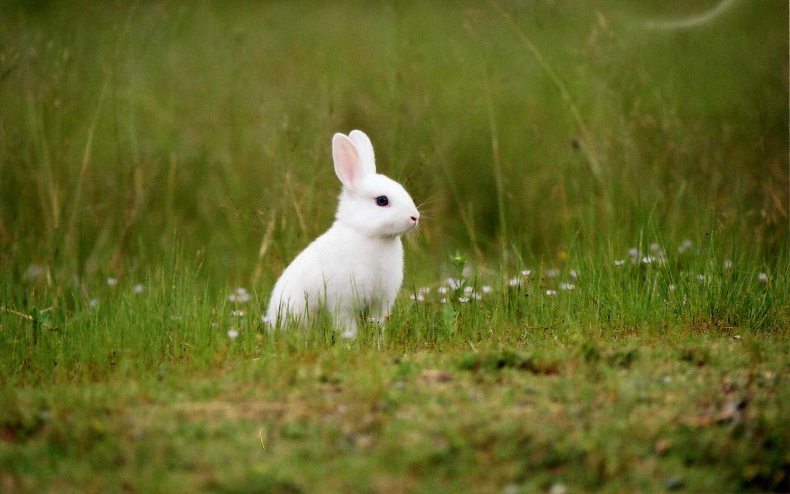 Rabbit Wallpapers For Desktop (65+ Images