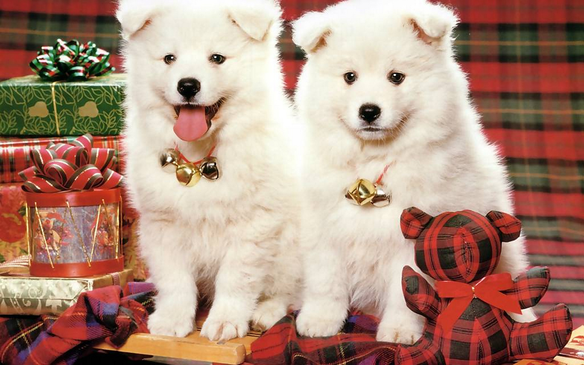 1920x1200 cute puppy christmas backgrounds. cute puppy christmas backgrounds y