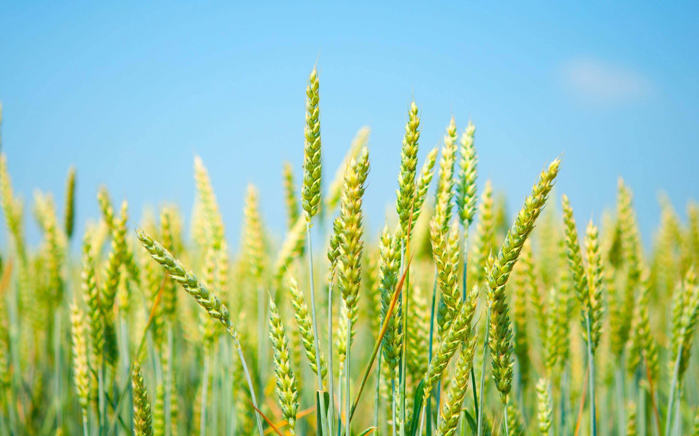 Grain Wallpaper 58 Images