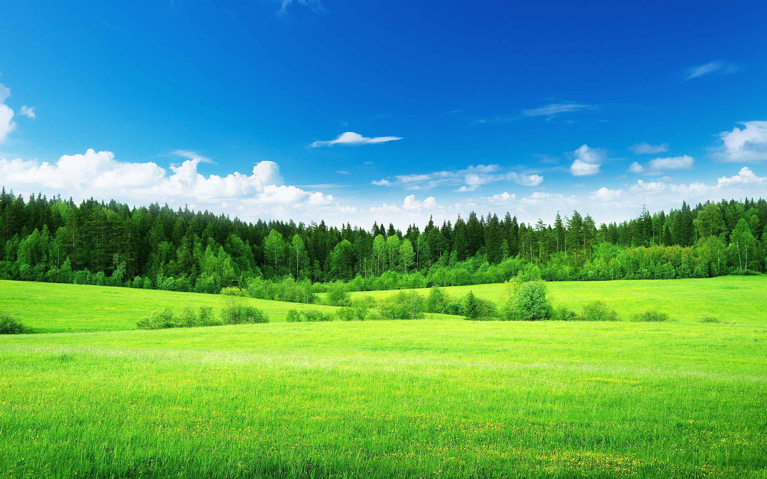 2560x1600 Green Nature Wallpaper Page 1