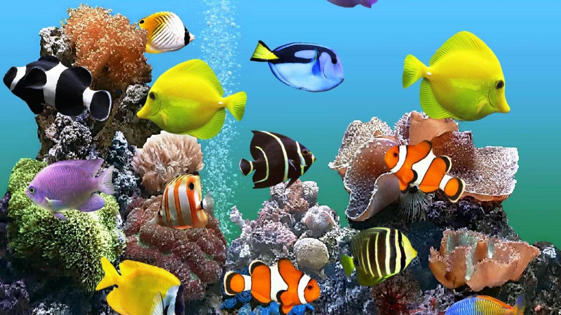 3d Aquarium Wallpaper 52 Images
