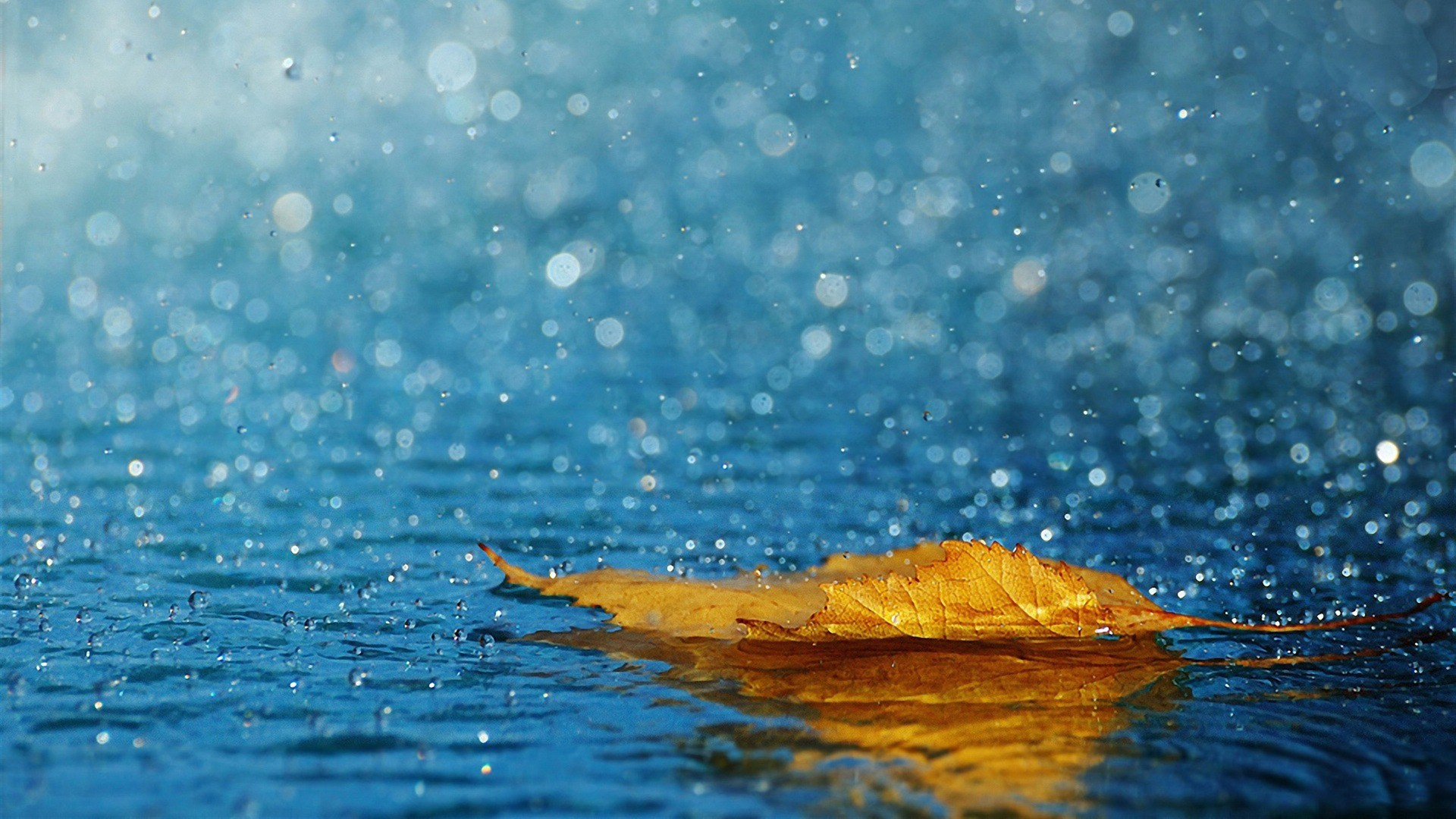 1920x1080 Rain drops in Summer - Top 10 HD Raindrop Wallpapers for Your Desktop