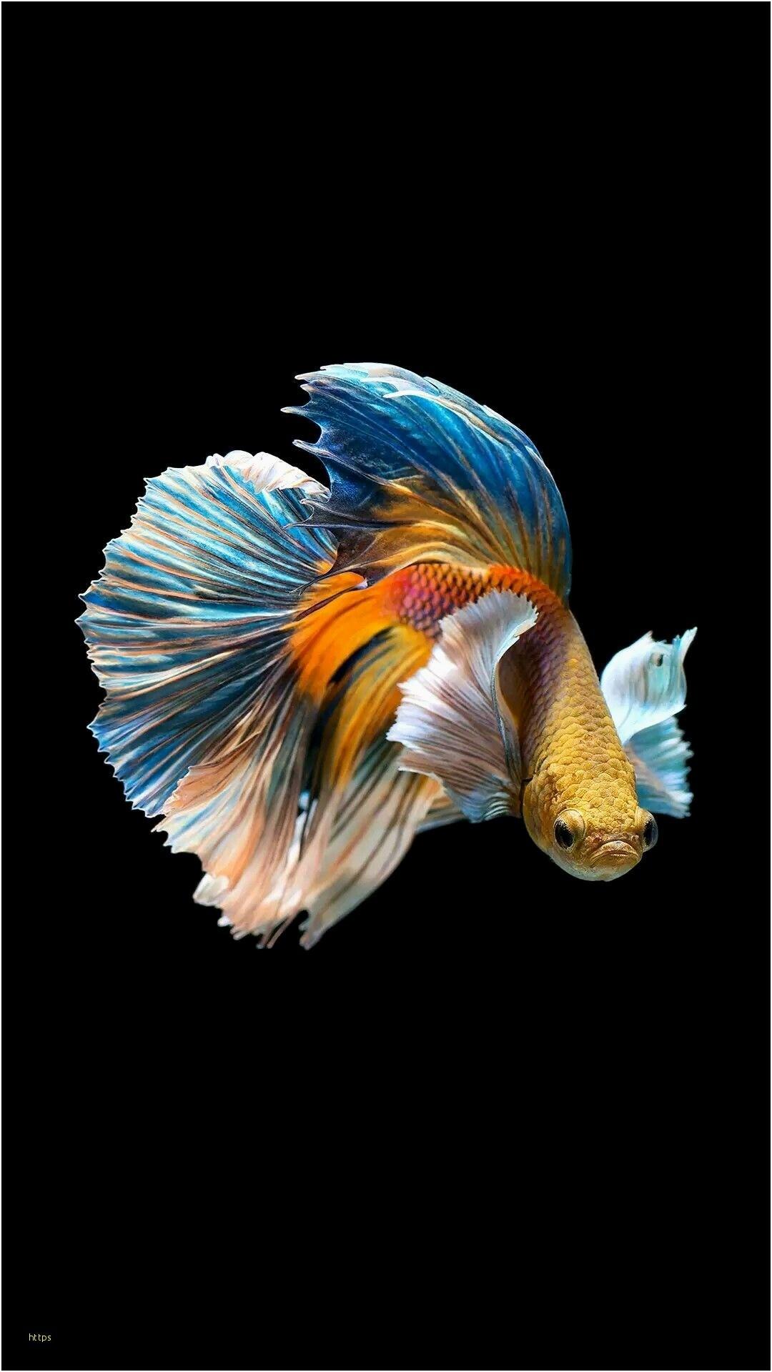 Wallpaper Koi Fish (70+ images)