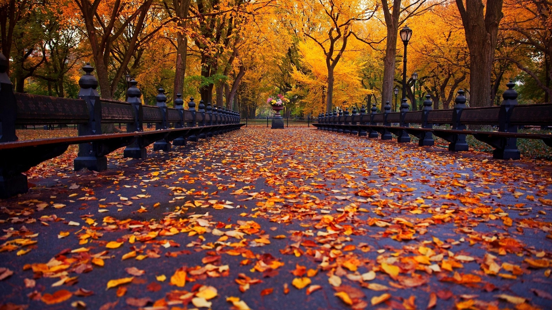 Cute Fall Wallpaper Backgrounds (60+ Images