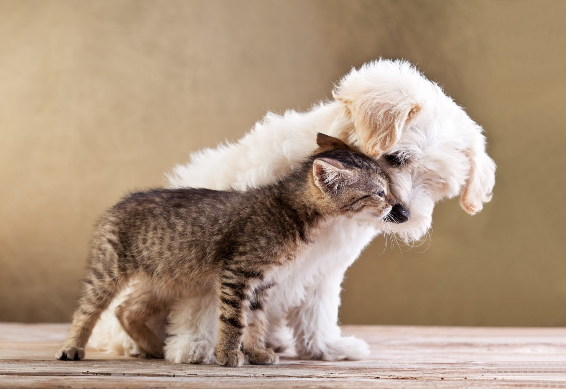 1920x1322 friends small dog and cat together puppy kitten love friends small dog cat  puppy kitten love