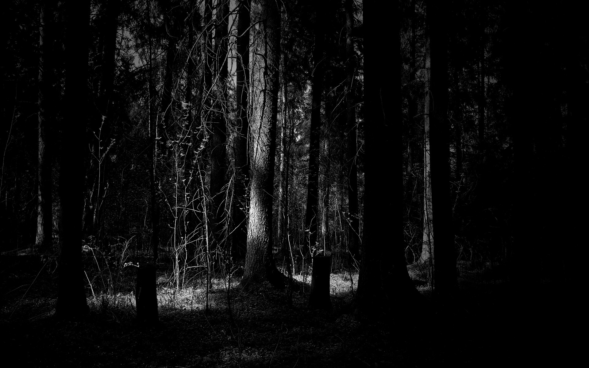 1920x1200 Dark-Forest-Widescreen-HD-Wallpaper.jpg.png