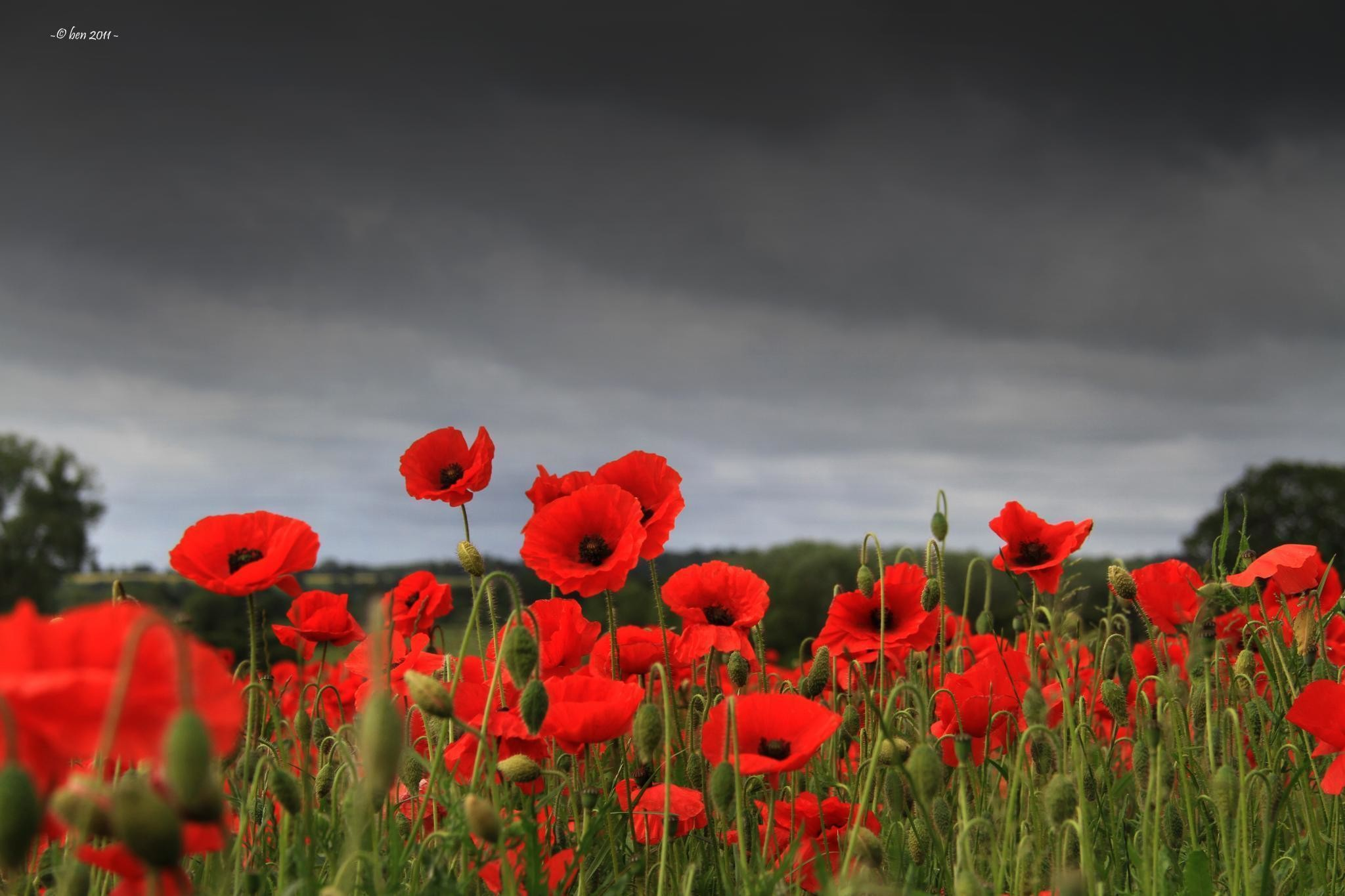 2048x1365 Images For > Remembrance Day Poppy Field